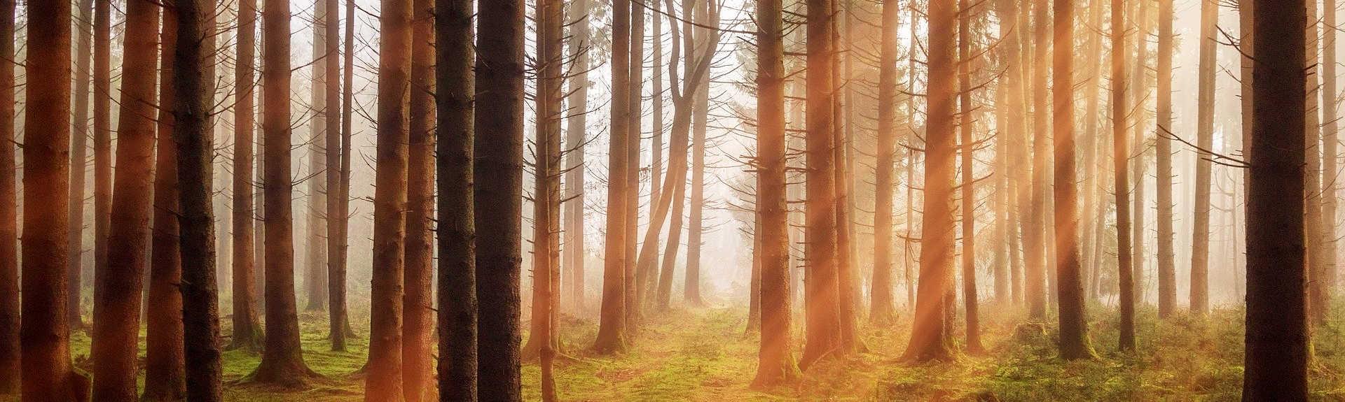header - Fôret d'arbres sans feuilles sous un coucher de soleil